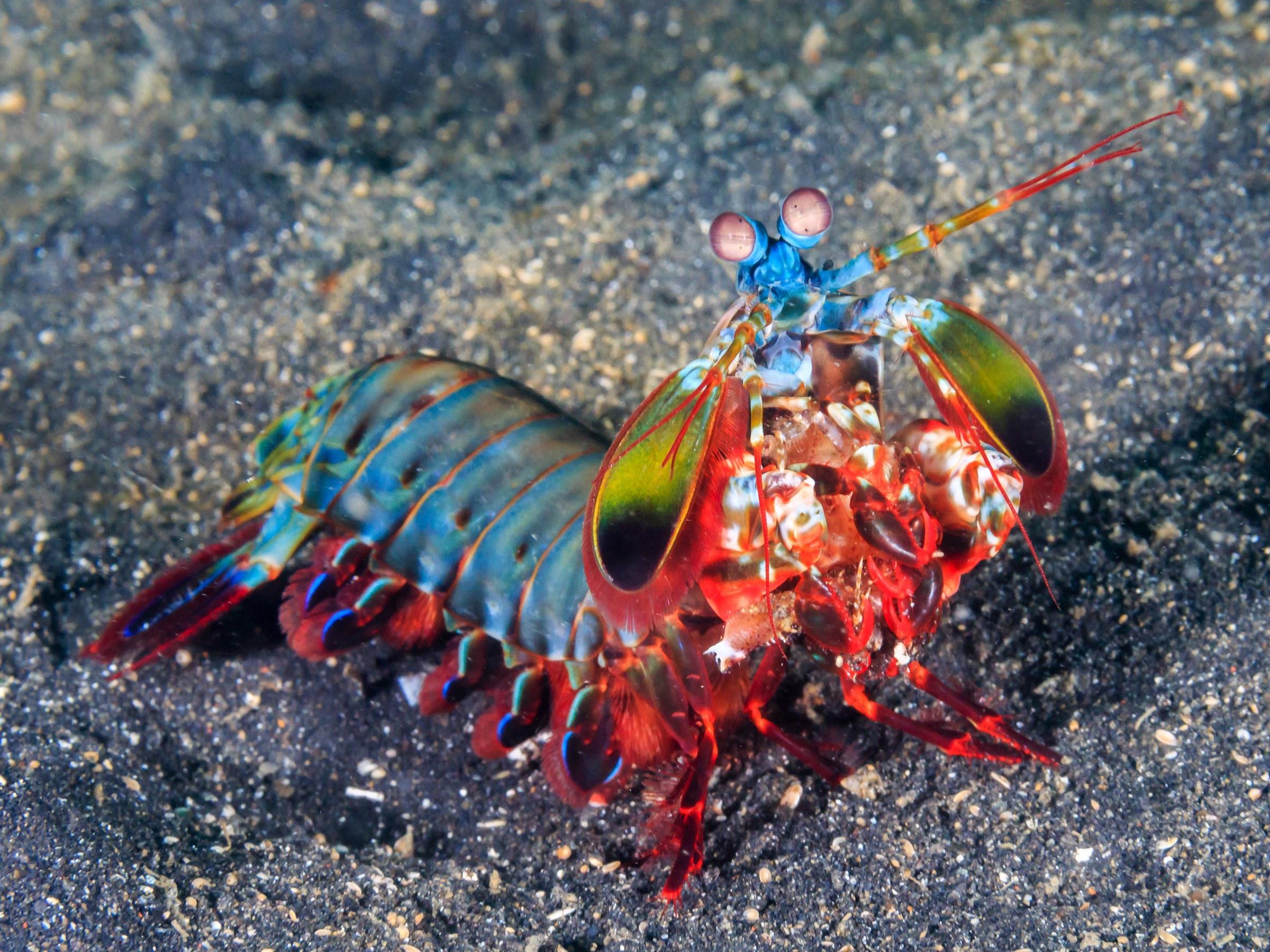 mantisshrimp-467993194